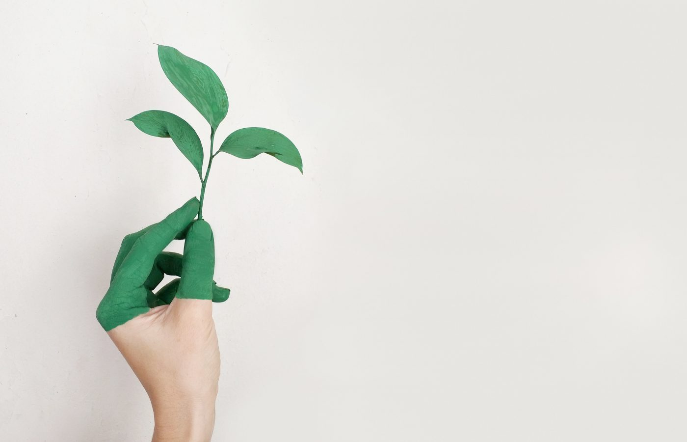 Hand holding up a plant